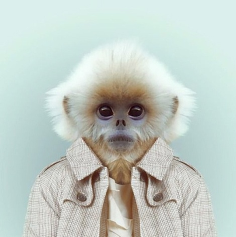 Zoo-Portraits-Modelos-animais-bem-legaus-11