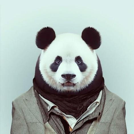 Zoo-Portraits-Modelos-animais-bem-legaus-14