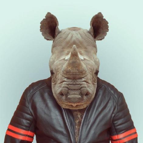 Zoo-Portraits-Modelos-animais-bem-legaus-2