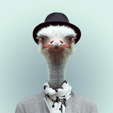 Zoo-Portraits-Modelos-animais-bem-legaus-3