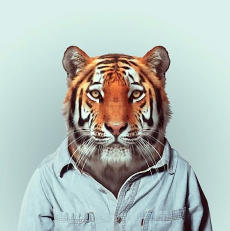 Zoo-Portraits-Modelos-animais-bem-legaus-5