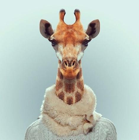 Zoo-Portraits-Modelos-animais-bem-legaus-7
